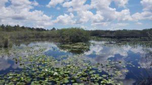Florida Everglades Homestead