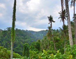 one week in bali itinerary