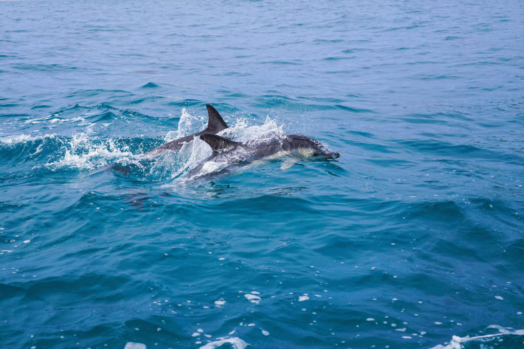 dolphins new zealand