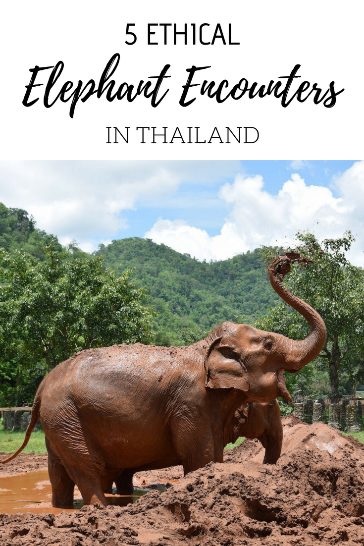 ethical elephant experiences